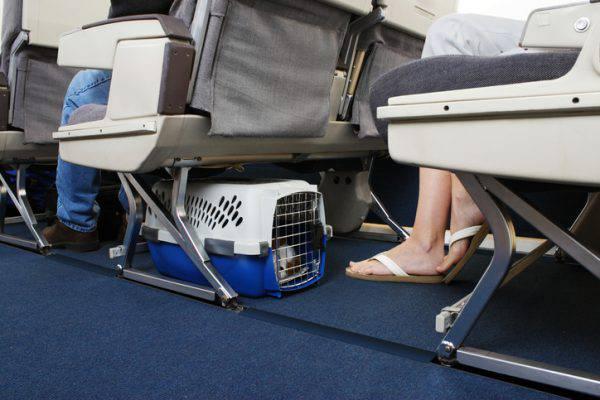 trasportino animali aereo
